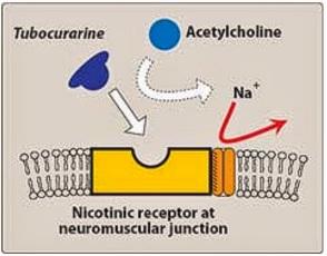 Neuromusc block